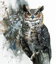 Owl by Morten E. Solberg Sr.