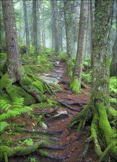 Green Mountain National Forest, Vermont. This may be in Vermont, but I have hiked many N.W. trails just like this one!