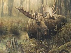Original wildlife paintings and limited edition prints for sale by Canadian Wildlife Artist, Denis Mayer Jr. Wildlife art, commissions and prints available. Wildlife Paintings, Wildlife Art, Animal Paintings, Wildlife Decor, Bull Moose, Moose Art, Moose Antlers, Aigle Animal, Moose Pictures