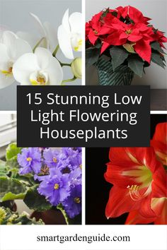 These 15 stunning houseplants will thrive and bloom indoors even if you can't provide bright lighting. Care tips, descriptions and pictures of 15 of my favorite low light flowering houseplants. Indoor Flowering Plants, Blooming Plants, Container Gardening, Gardening Tips, Orchids In Water, Kitchen Plants, Growing Orchids, Smart Garden, House Plant Care