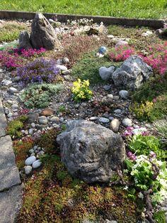 Ich liebe meinen Steingarten im Frühling
