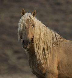 Carol Walker A wild Horse in the Sand Wash Basin Herd Area of Colorado