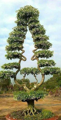 Weird Trees, Magical Tree, Twisted Tree, Unique Trees, Old Trees, Unusual Plants, Bonsai Garden, Nature Tree, Tree Forest