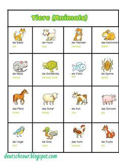Deutsch lernen: Tiere (Animals)