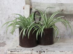 Metal Plant Pot: A repurposed dual metal plant pot that is distinctly industrial vintage chic!      Shabby chic style     Easy to hang     Indoor/Outdoor     Multiple uses     Repurposed  This metal pot has been repurposed from old iron, it's been styled after antique measuring cups found in India. We've added a round hook or handle so you can conveniently hang these plant pots. #plantpots #plants Potted Plants, Plant Pots, Shabby Chic Style, Vintage Industrial, Vintage Furniture, Indoor Outdoor, Measuring Cups, Antiques, Metal