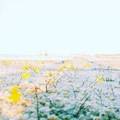 #landscape #outdoor #ourplanetdaily #motherearth #travelgrams #travellover #travel #trip #tripadvisor #flores #flowermagic #flowerstagram #flowerporn #flower #flowertheday #photooftheday #pics #picoftheday #naturelove #naturephotography #natureporn #nature_perfection #nordestegram #nordeste #maranhao #lencoismaranhenses