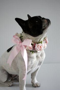 Diy dog collar girl pets Ideas for 2020 Diy Dog Collar, Dog Wedding Collar, Wedding Dogs, Dog Wedding Dress, French Wedding Style, French Bulldog Wedding, Pet Dogs, Pets, Doggies