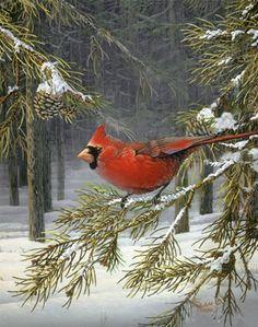 Woodland Cardinal - Sam Timm  MY MOM'S FAVORITE BIRD.