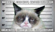 My kitty!  LOL!