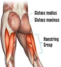 Building a stronger, firmer, bigger butt requires hitting the gluteus maximus, gluteus medius, and the hamstring muscles. Fitness Tips, Fitness Motivation, Health Fitness, Pilates, Hamstring Muscles, Hamstring Stretches, Butt Challenges, Gluteus Medius, Get In Shape