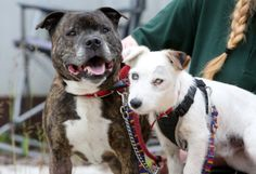 Buzz and Glenn, two abandoned dogs who were rescued from a sea tunnel in Hartlepool. (SWNS)