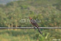 Das Wildleben von Costa Rica in Tarcoles
