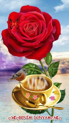 www.facebook.com/BnMDnYm.67/ Good Morning Gif, Good Morning Images, Colorful Roses, Red Flowers, Coffee Bean Art, Love You Gif, Coffee Images, Hearts And Roses, Romantic Images
