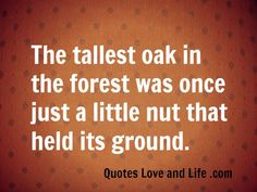 Positive Quotes: Funny Pun: The Tallest Oak In The Forest Was Once Just A Little Nut That Held Its Ground. I love it!