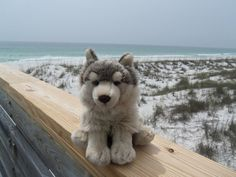 Went to the beach today (Yes again). This time I brought my Webkinz Signature Timber Wolf- Mostly for reasons as to get some decent Icons/Cover art for .: Timber Wolf At the Beach :. Wolf Stuffed Animal, Stuffed Animals, Webkinz Signature, Wolf Plush, Timber Wolf, Cat Names, Plushies, Cover Art, Husky