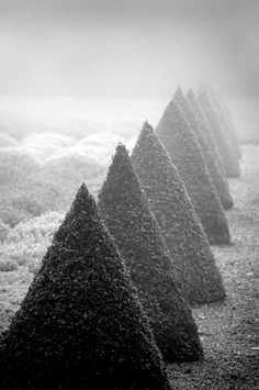 preciousandfregilethings:  artsophile: Jeff Eden, Pointed topiary in Winter, Ham House, Richmond-upon-Thames, Surrey Winner Monochrome category, International Garden Photographer of the Year http://www.igpoty.com/