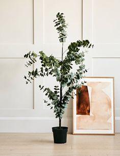 Faux Eucalyptus Tree Bunch Of Flowers, Faux Flowers, Silk Flowers, Fake Trees, Faux Plants, Artificial Plants, Hanging Plants, Botanical Prints, Home Decor Inspiration