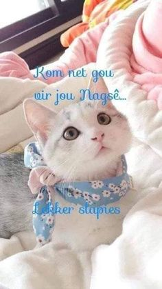 Wish Quotes, Cute Quotes, Evening Greetings, Good Night Blessings, Goeie Nag, Afrikaans Quotes, Birthday Wishes Quotes, Good Night Quotes, Morning Greeting