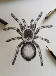 Engraving Illustration, Graphic Illustration, Animal Drawings, Pencil Drawings, Spider Drawing, Meaningful Tattoo Quotes, Spider Tattoo, Art Drawings Sketches Simple, Tattoo Inspiration