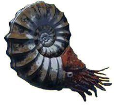 Ammonite Reconstructed