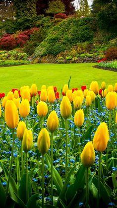 Bunga Tulip Indah Warnawarni Pokeronline Agenpoker Gbkpoker Taman Indah Kebun Bunga Tulip