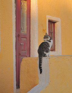 Cats in Greece #3: Santorini | Flickr - Photo Sharing!