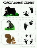 Not normally a fan of printables like this, but here is a good set of free PK printables for learning about animals of the forest animals silly animals animal mashups animal printables majestic animals animals and pets funny hilarious animal Forest Animals, Woodland Animals, Arctic Animals, Majestic Animals, Montessori, Animal Activities, Animal Science, Animal Tracks, Forest Theme