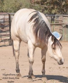 Ranch! Winchester Shotgun, Quarter Horses For Sale, American Quarter Horse, Palomino, Ranch, Animals, Guest Ranch, Animales, Animaux