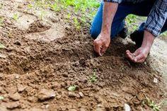 Minden növénynek megvan az ideális ültetési ideje. Van jó pár, amit már vethetsz, amint felolvad a föld. (A szemfülesek kihasználták a február eleji enyhe napokat és most már csak ölbe tett kézzel várják, hogy előbújjanak a kis máknövendékek.) Ám legtöbbünknek mégis úgy tűnik, az olvadás idén igencsak késve történik, úgyhogy akkor se aggódj, ha a veteményesed még nincs előkészítve – maradt néhány napod, csak bírd majd levakarni a sarat a gumicsizmád talpáról. Néhány növény többször is…