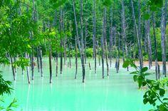 青い池(雨上がりのため白濁)