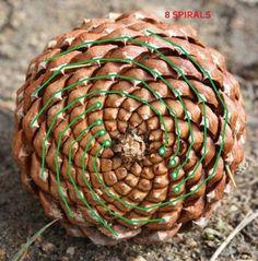Mathematical symmetry of pinecones