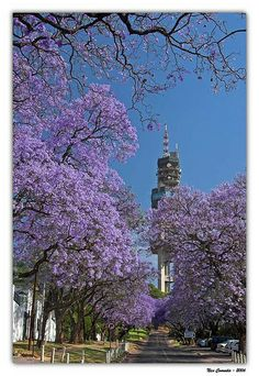 Jacaranda Tower, Pretoria, South Africa