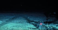 Those terrifying deep sea creatures? They're not even halfway to the lowest point.