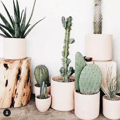 Cactus heaven!