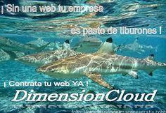 Sin una web, tu empresa es pasto de tiburones.