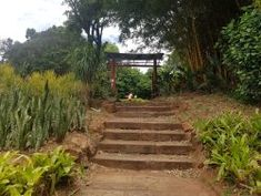 Durban North Japanese Gardens - 2020 All You Need to Know Before You Go (with Photos) - Durban, South Africa Attraction, Japanese Gardens, Holiday Activities, Outdoor Play, Garden Bridge, South Africa, Trip Advisor, Outdoor Structures