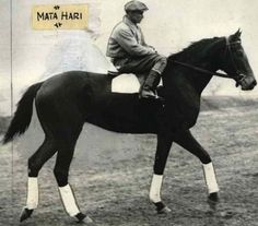 Mata Hari: 1933 Co-Champion 2YO Filly & 1934 Co-Champion 3YO Filly. A 1931 daughter of Peter Hastings out of a Man O' War mare, she set 2 track records (as did her son, Spy Song) & was a multiple stakes winner.