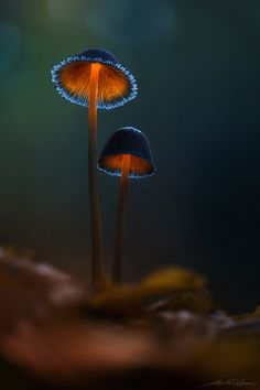 I have no idea what kind of mushroom this is, but with the lighting, the picture is just Amazing by Brent Csutoras