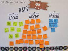 bats kwl chart first grade