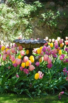 Gorgeous Tulips and a lovely bird bath are behind a stone wall like a Secret Garden. Beautiful Flowers, Spring Garden, Beautiful Gardens, Country Gardening, Outdoor Gardens, Bird Bath, Spring Flowers, Spring Tulips, Cottage Garden