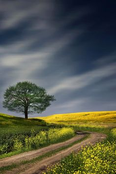 country landscape photography love my golden Landscape Photos, Landscape Art, Landscape Paintings, Landscape Photography, Nature Photography, Beautiful World, Beautiful Places, Beautiful Pictures, Lone Tree