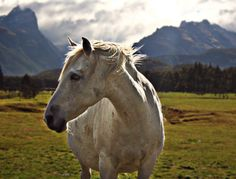 That horse, New Zealand and those wild mountains in the background (used to film Isengard scenes anyway) reminds me of ASFALOTH