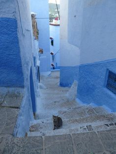Just me and one of the locals / Chefchaouen