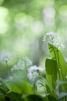 Image result for green is beautiful