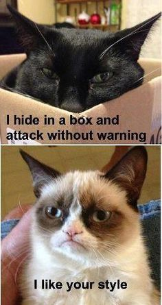 Grumpy cat admires a fellow feline's style - Funny Cat Quotes Grumpy Cat Quotes, Funny Grumpy Cat Memes, Funny Animal Jokes, Cat Jokes, Cute Funny Animals, Funny Animal Pictures, Animal Memes, Cute Baby Animals, Cute Cats