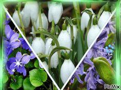 Entraînement en ligne - FLE: Fleurs de printemps. Diaporama et jeu en ligne. Ex...