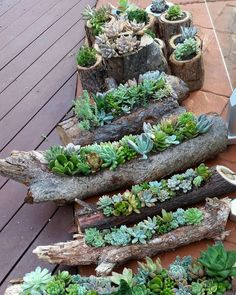 ❤~ Cactus~❤~Suculentas~❤ Succulent gardens in hollowed out logs and also in timber rounds available from the Succulent Guy at the Byron Bay Beachside Market - Easter Saturday March. by thesucculentguy Garden Projects, Plants, Succulents Diy, Succulents, Garden Decor, Garden Inspiration, Container Gardening, Garden Landscaping, Indoor Plants
