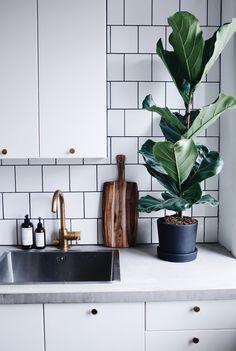 Snygga växter i köket