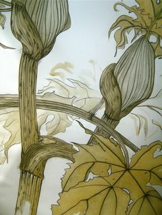 catherinewillis:    from my Normandy studio  BERCE GEANTE DU CAUCASE  pierre noire and sap from the leaves of this giant hogweed.2010