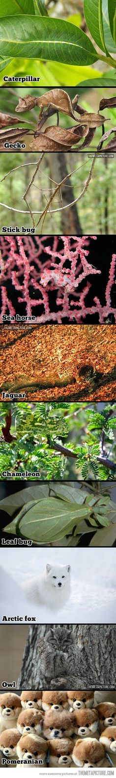 Extraordinary camouflaged animals…